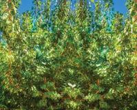 Fondo del cespuglio dell'albero Immagini Stock