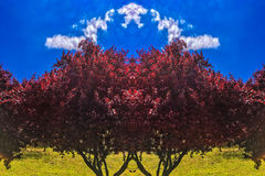 Fondo del cespuglio dell'albero Immagine Stock Libera da Diritti