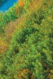 Fondo del cespuglio dell'albero Fotografia Stock Libera da Diritti