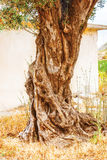 Fondo del cespuglio dell'albero Fotografie Stock