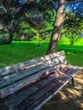 Fondo del cespuglio dell'albero Fotografia Stock