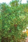 Fondo del cespuglio dell'albero Fotografie Stock Libere da Diritti