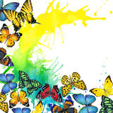 Fondo del chapoteo de la mariposa y de la acuarela Foto de archivo