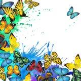 Fondo del chapoteo de la mariposa y de la acuarela Fotografía de archivo