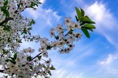 Fondo del cielo azul con las nubes minúsculas Fotos de archivo