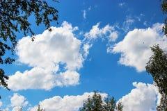 Fondo del cielo azul y de algunas nubes en el marco del abedul Foto de archivo