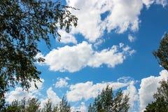 Fondo del cielo azul y de algunas nubes en el marco del abedul Fotografía de archivo