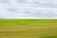 Fondo del cielo blu di struttura dell'erba verde Fotografie Stock