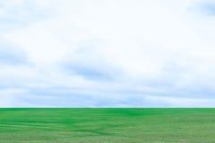 Fondo del cielo blu di struttura dell'erba verde Immagine Stock