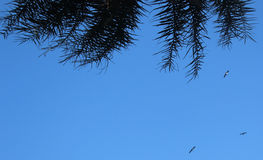 Fondo del cielo con las hojas de palma fotos de archivo