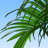 Fondo del cielo con le foglie di palma Immagini Stock Libere da Diritti