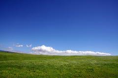 Fondo del cielo y de la hierba Foto de archivo libre de regalías