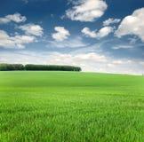 Fondo del cielo y de la hierba Fotos de archivo libres de regalías
