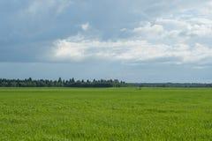 Fondo del cielo y de la hierba, campos verdes frescos debajo del cielo azul en verano Foto de archivo