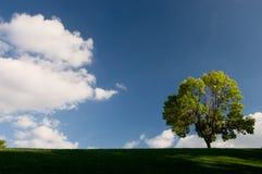 Fondo del cielo y del árbol Fotos de archivo libres de regalías
