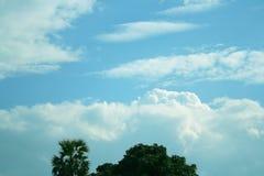 Fondo del cielo y top de árboles imagenes de archivo