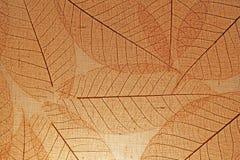 fondo del cierre de la hoja del árbol para arriba Imagenes de archivo