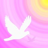 Fondo del color de rosa de la paloma del blanco Stock de ilustración