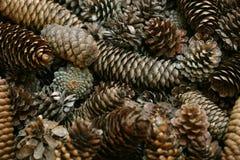 Fondo del cono del pino Foto de archivo