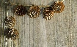 Fondo del cono dell'albero di larice Fotografie Stock