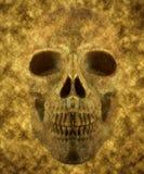 Fondo del cráneo Fotografía de archivo
