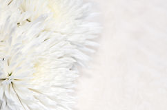 Fondo del crisantemo Fotografie Stock