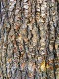 Fondo del cuerpo del árbol Fotografía de archivo