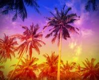 Fondo del día de fiesta hecho de siluetas de las palmeras en la puesta del sol Imagenes de archivo