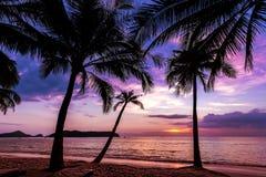Fondo del día de fiesta hecho de siluetas de las palmeras en la puesta del sol Imagen de archivo
