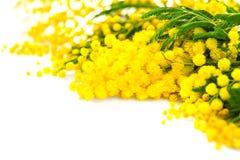 Fondo del día del ` s de la madre La primavera de la mimosa florece la frontera foto de archivo