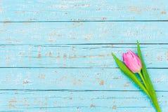 Fondo del día del ` s de la tarjeta del día de San Valentín con en la flor rosada del tulipán en superficie de madera azul clara  Imagenes de archivo