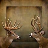 Fondo del dólar/de los ciervos Foto de archivo