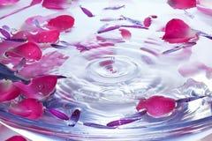 Fondo del descenso del agua de los pétalos de la flor imagenes de archivo