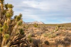 Fondo del deserto con lo spazio della copia Fotografia Stock
