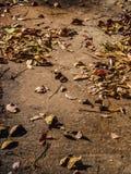Fondo del deshoje Foto de archivo libre de regalías
