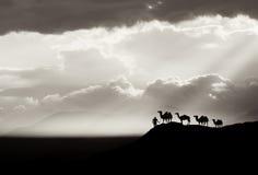 Fondo del desierto del Bw Imagen de archivo libre de regalías