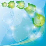 Fondo del eco del resorte con las hojas verdes frescas libre illustration
