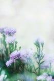 Fondo del estilo de la flor del vintage con el bokeh de la falta de definición Fotografía de archivo libre de regalías
