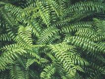 Fondo del extracto de Forest Outdoor Nature de la hoja de los helechos Fotografía de archivo