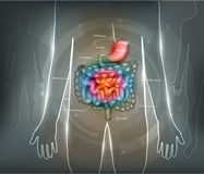 Fondo del extracto del aparato gastrointestinal ilustración del vector