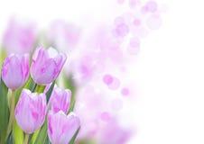 Fondo del fiore Fotografia Stock Libera da Diritti