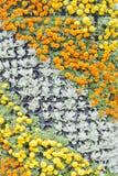 Fondo del fiore Fotografie Stock Libere da Diritti