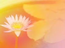Fondo 5 del fiore immagini stock libere da diritti
