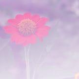Fondo 9 del fiore fotografie stock libere da diritti