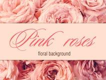 Fondo del fiore con le rose rosa Immagine Stock Libera da Diritti