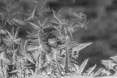fondo del fiore del ghiaccio Fotografie Stock Libere da Diritti