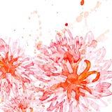 Fondo del fiore dell'acquerello della primavera Vettore illustrato Fotografie Stock Libere da Diritti
