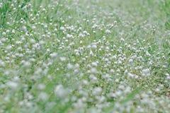 Fondo del fiore dell'erba Fotografie Stock Libere da Diritti