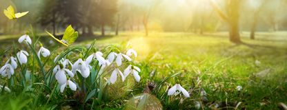 Fondo del fiore della molla di Pasqua; fiore fresco e farfalla