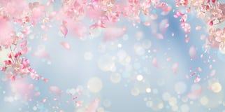 Fondo del fiore della primavera royalty illustrazione gratis